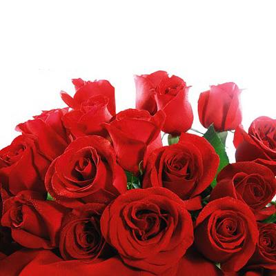 Especial Dia dos Namorados: Ramo de 12 Rosas Vermelhas-0