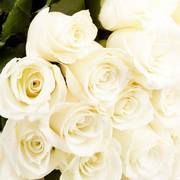 Especial Dia da Mãe: Ramo de 12 Rosas c/ entrega Porto-0
