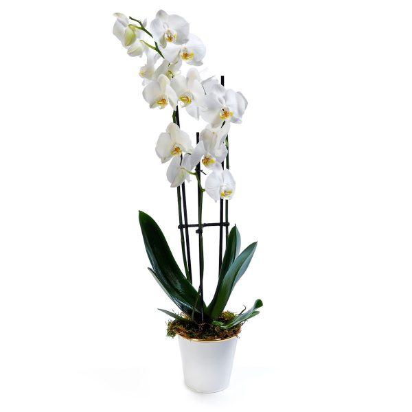 Vaso Decorativo de Orquídea Phalaenopsys-0